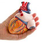 printing-human-organs